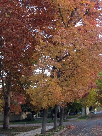 Autumn87